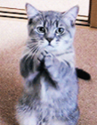 猫咪拜拜动态图片 猫咪求人动态图