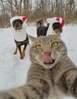 猫咪自拍照