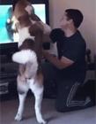 世界上最蠢的狗