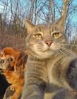 爱自拍的猫图片
