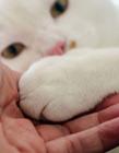 猫咪的肉垫好可爱