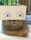 妞妞端午图片 端午猫和妞妞狗