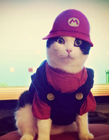 宠物猫的衣服 宠物猫衣服