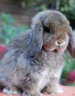 兔子可爱视频