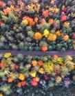 森林俯瞰图片 森林俯瞰图