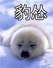 白色海豹表情包 白色海豹表情包豹怒