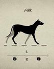 狗狗走路姿势