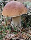 蘑菇高清图片 蘑菇高清图片大全
