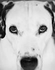 斑点狗图片 斑点狗图片大全