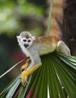 松鼠猴的图片 远看的松鼠猴图片