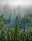 云雾缭绕的森林图片 森林雾气图片
