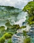 热带雨林风景图片