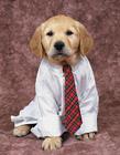 狗狗的奇装异服