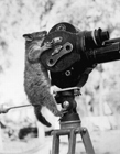 动物扮演摄影师
