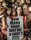 西班牙动物保护协会组织抗议