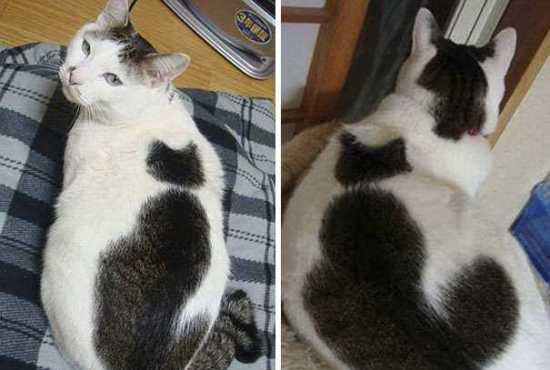 """这只猫身上还背着一只""""猫"""""""