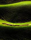 新疆天山风景图片