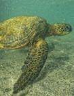 海龟的图片大全 海龟的种类及图片