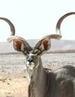 哪里有羚羊养殖