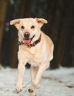 奔跑的小狗图片