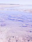 滩涂图片 滩涂是什么意思