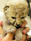 抚摸小动物gif动态图片