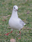 白色海鸥图片 白色海鸥图片大全