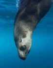 海豹为什么喜欢抱人 为什么海豹喜欢靠近人