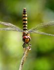 美丽的蜻蜓图片大全