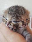 南非诞生双脸小猫 两张嘴两个鼻子三只眼的喵星人你见过吗