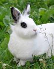 小白兔可爱图片 可爱的小白兔图片