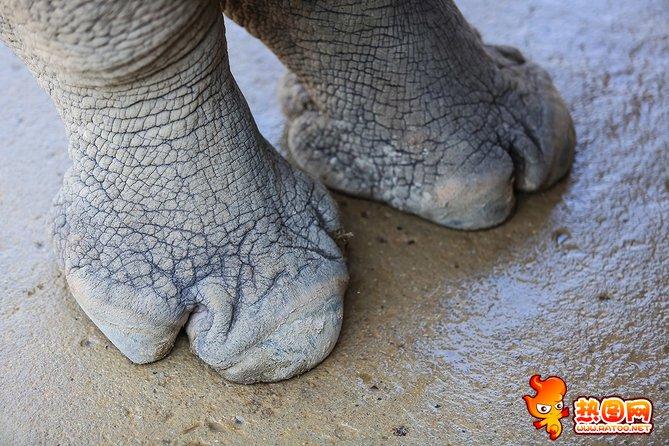奇形怪状的动物脚印图片