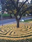 秋天落叶的图片