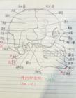 人体解剖学笔记 人体解剖笔记