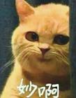 橘猫妙啊表情包 高清橘猫表情包妙啊