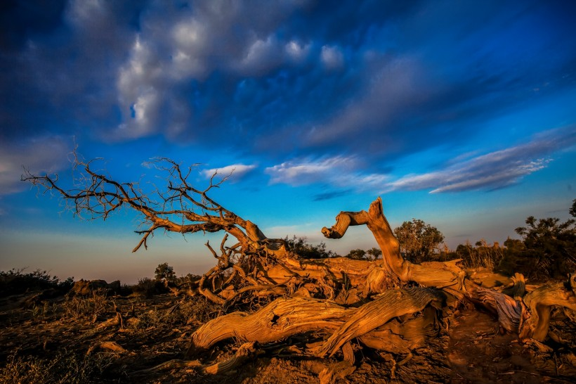 高清枯树图片 枯树素材