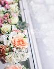 各种漂亮花朵图片大全 让生活充满了诗意