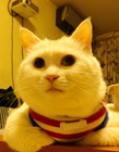 可爱喵星人贱猫梁大白的幸福生活图片