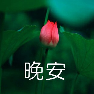 佛系青年莲花表情包带字 莲花表情包什么意思
