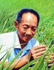 杂交水稻专家袁隆平照片 不愧被誉为世界杂交水稻之父
