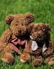 泰迪熊玩具图片高清 毛绒玩具萌化你的心