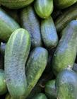 黄瓜的功效与作用 黄瓜的功效与作用价值