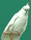鹦鹉表情包gif动图 搞笑的鹦鹉们人见人爱