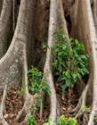 各种各样的树根图片 树根照片