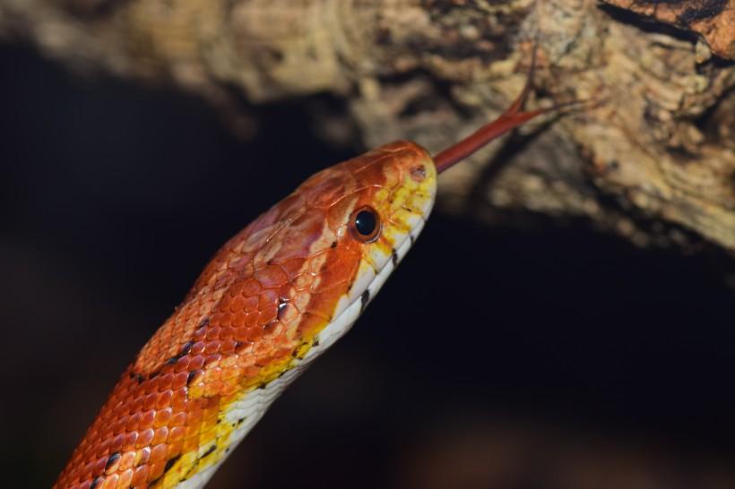 蛇头正面图片 蛇头图片大全-动物图片-热图网