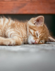 爱睡懒觉的小猫 小猫咪睡懒觉图片