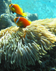 珊瑚的功效与作用 珊瑚有什么功效