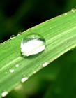 绿叶上的水珠图片 绿叶上的露水护眼图片