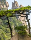 江西三清山风景区 三清山什么季节去最好 江西旅游必去十大景点