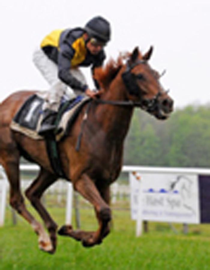 速度赛马高清大图 赛马是历史最悠久的运动之一